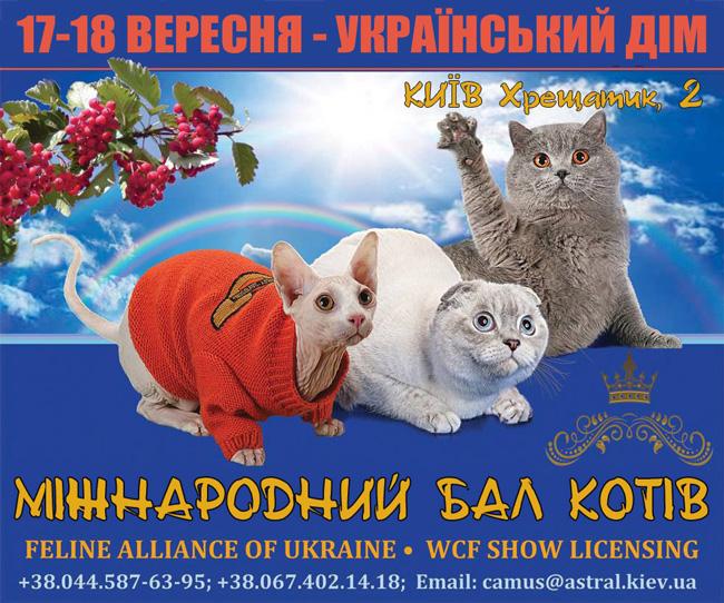 Выставка кошек. Киев.  17-18 сентября